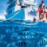 Storck Cruises